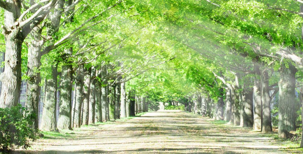 あなたの人生を照らす 木漏れ陽のような存在でありたい
